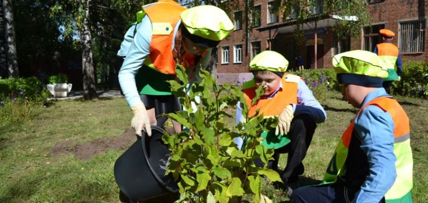 В Ижевске у школы №63 посадили 15 кустов сирени