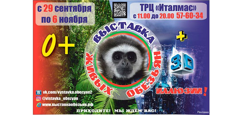 Поющий гиббон и самая красивая в мире мартышка приехали на выставку обезьян в Ижевск