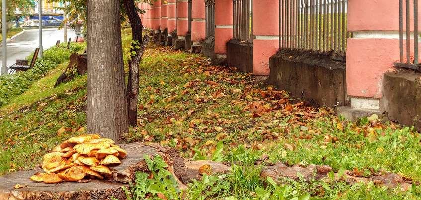 Продление домашнего ареста Александру Соловьеву и запуск светофора на Пушкинской: о чем говорят в Ижевске этим утром?