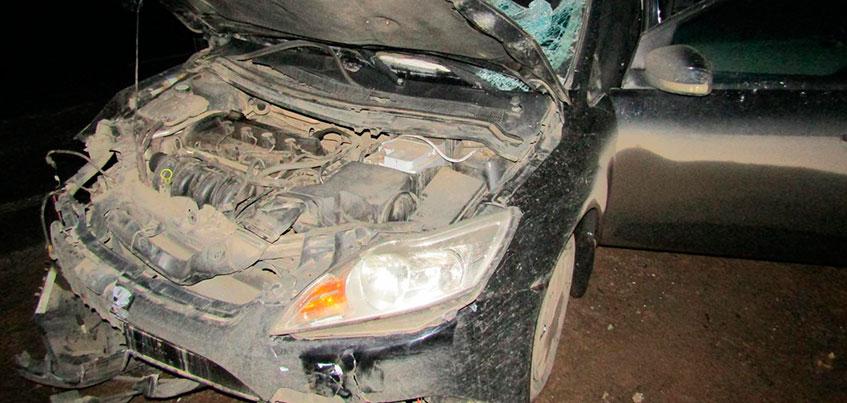 Три человека пострадали в ДТП с лосем на Славянском шоссе Ижевска