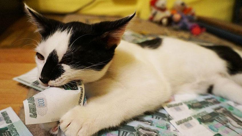 Новые законы: налог на животных и плата за курорты
