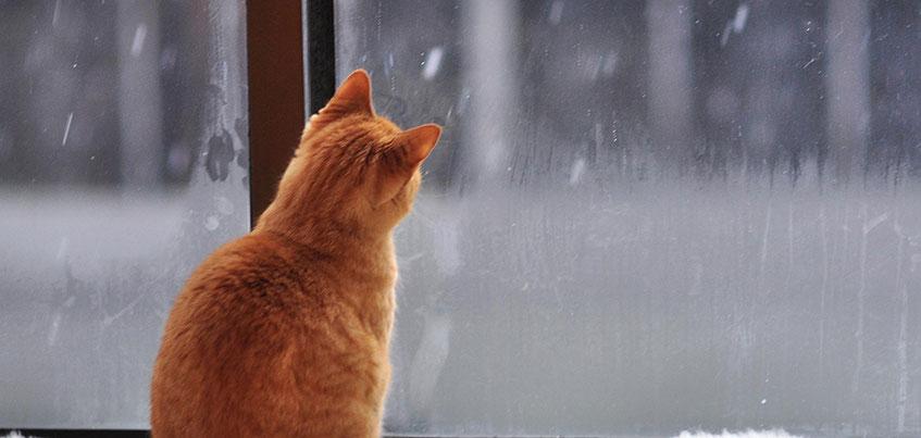 Погода на выходные в Ижевске: снегопады, накат и потепление до -1
