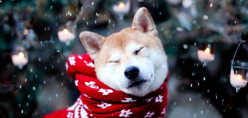 Какая погода будет в новогодние праздники в Ижевске?