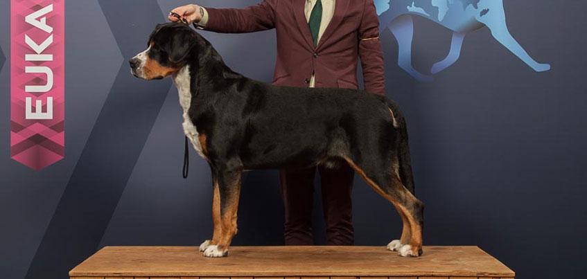 В Ижевске живет пес, выигравший титул Чемпиона Мира в Германии