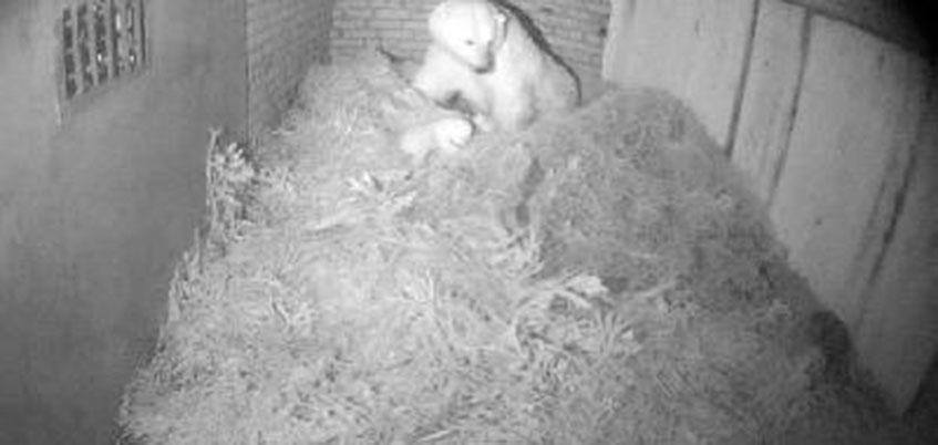 Медвежонка в зоопарке Ижевска назвали Снеженикой Айоновной