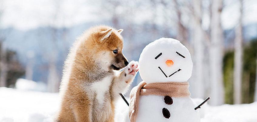 Погода в Ижевске: рабочая неделя будет снежной