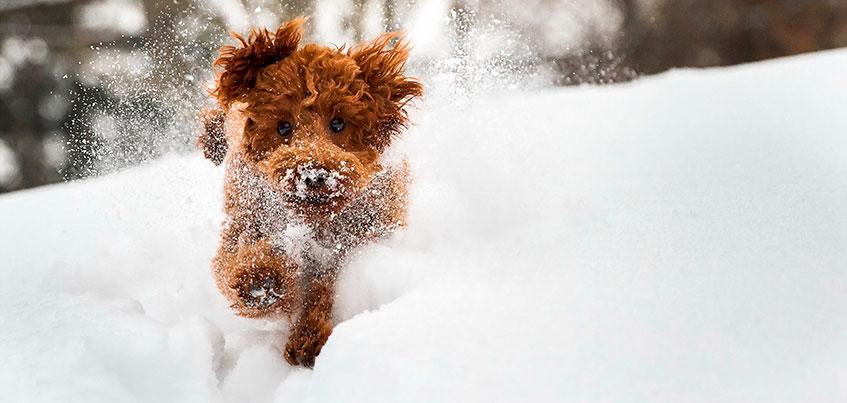 Погода в Ижевске: будут ли сильные снегопады?