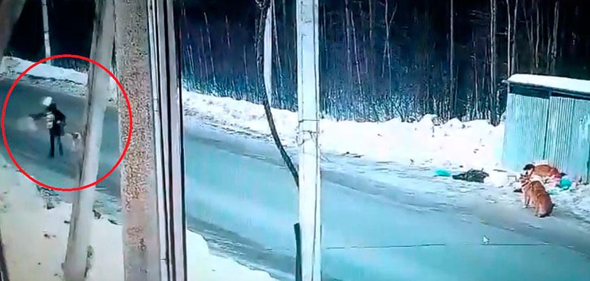 В Ижевске бездомные собаки напали на школьницу в Липовой роще