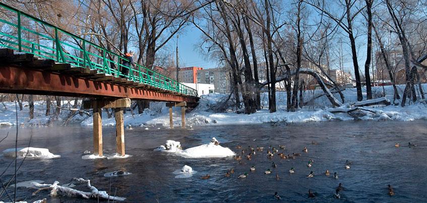 Фотофакт: жители Ижевска помогают зимующим уткам пережить холода
