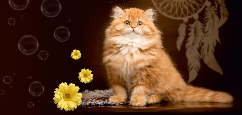 31 марта и 1 апреля в Ижевске пройдет выставка кошек и цветов