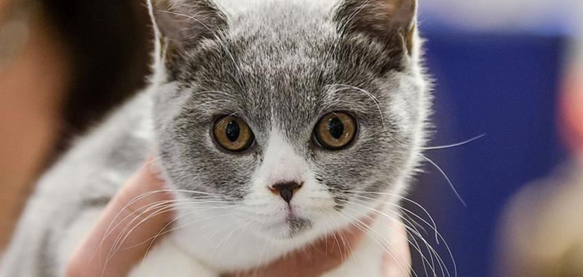 Выставка кошек и ночь аниме: чем заняться в Ижевске с 23 марта