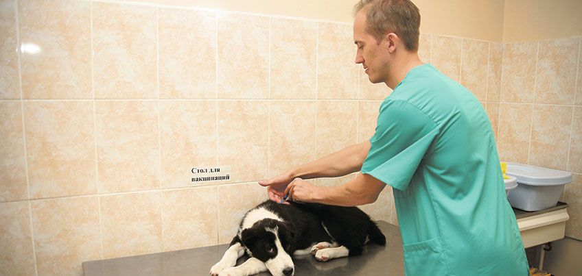 Осторожно, бешенство: ижевчан призывают бесплатно привить кошек и собак
