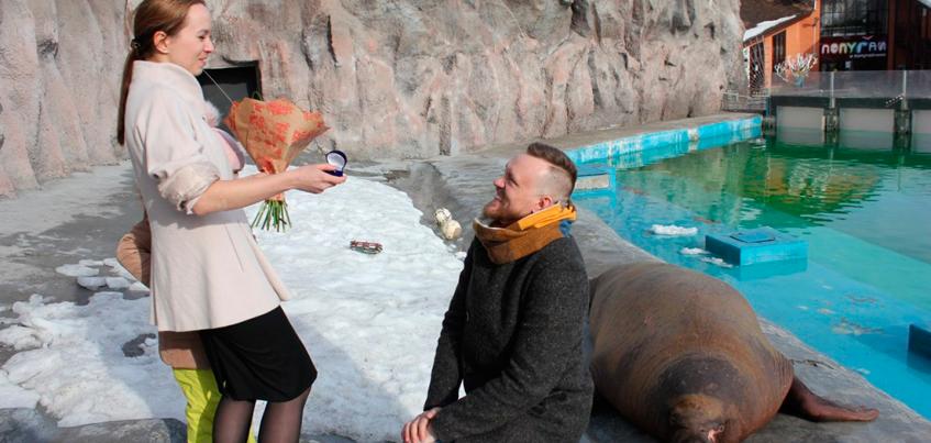 Житель Ижевска сделал предложение любимой в вольере с моржами