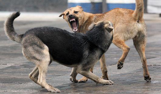 Власти Воткинска должны выплатить 60 тысяч рублей мальчику, покусанному собакой