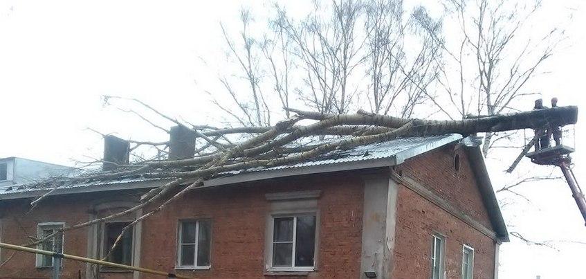 Дерево упало на жилой дом в Ижевске