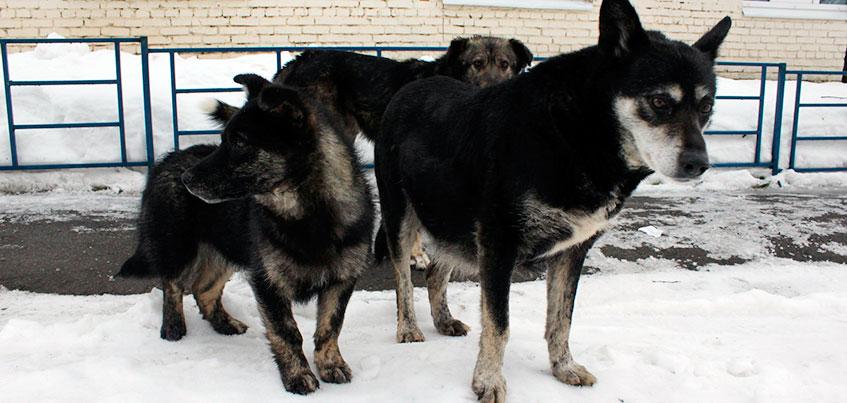 Друг человека: как в Ижевске решают вопрос с бездомными собаками