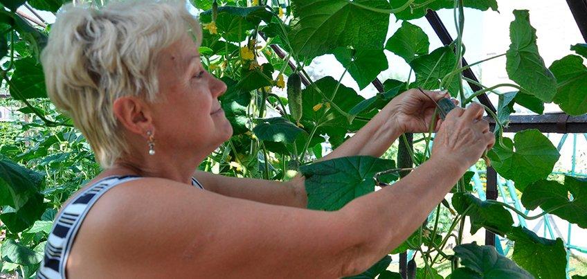 Как поставить теплицу, чтобы сохранить весь урожай?