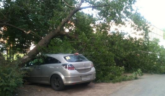 В Ижевске деревом в городке Металлургов прижало два автомобиля
