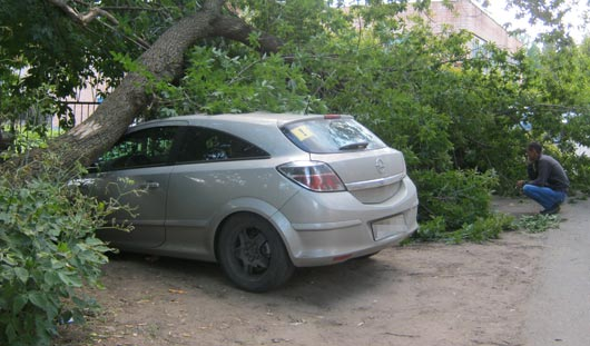 Упавшее дерево разбило стекла и помяло кузов двух машин на Подлесной в Ижевске