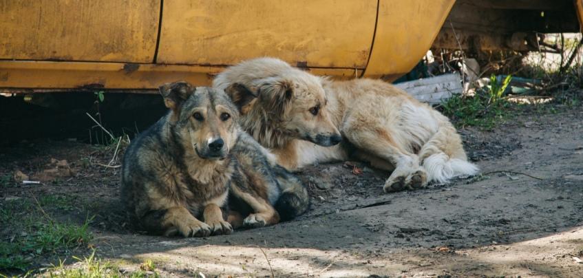 Вместо отлова – стерилизация: в Ижевске хотят ввести правила содержания домашних и бездомных животных