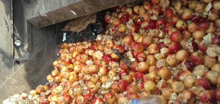 Более 600 кг санкционных яблок уничтожили в Ижевске