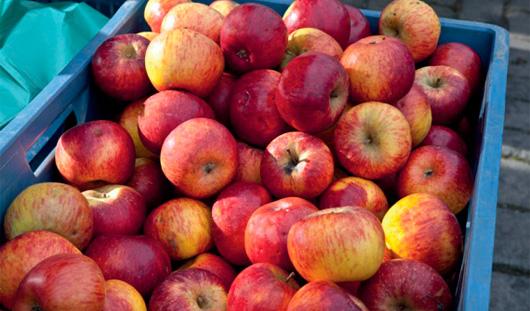 Где ижевчанам закупиться яблоками и смородиной?