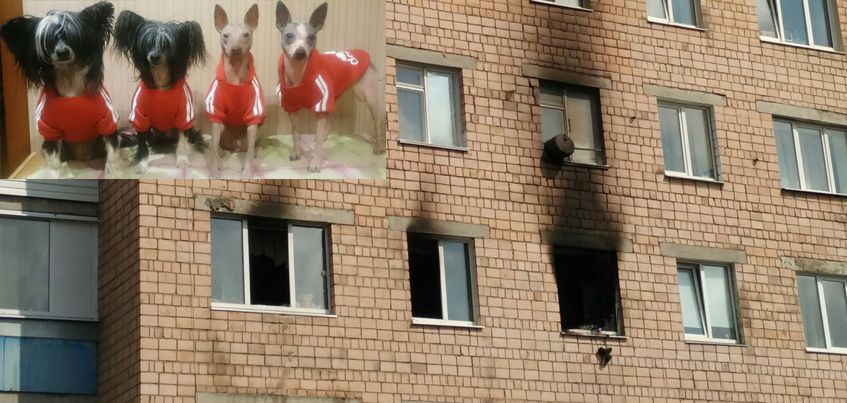 «Простите, что не уберегла»: 4 породистые собаки погибли при пожаре в Ижевске