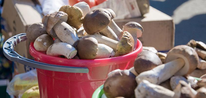 Где в Ижевске купить грибы и сколько они стоят?
