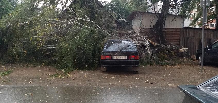 Поваленные деревья и дорожные знаки: как Ижевск пережил шквалистый ветер