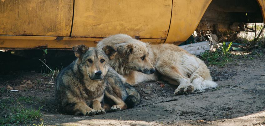 Почти 3,5 тысячи человек пострадали в Удмуртии от укусов животными