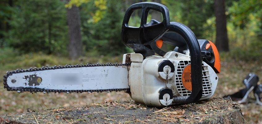 Упавшее дерево убило 51-летнего мужчину в Удмуртии