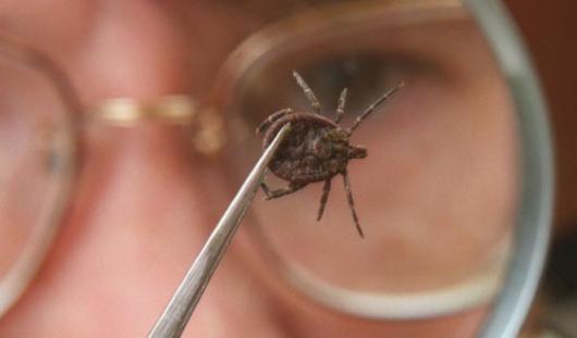 Более 12 тысяч жителей Удмуртии обратились с жалобами на укусы клещей