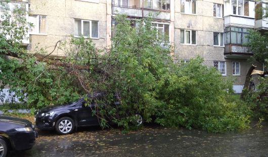 В Ижевске во время грозы дерево упало на Фольксваген