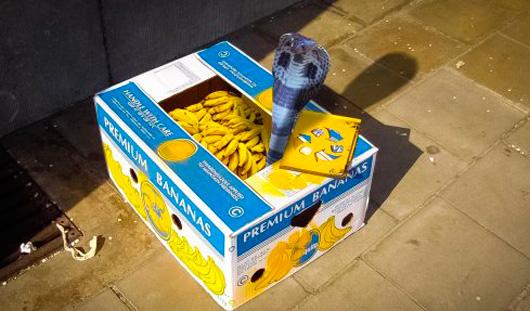 Есть вопрос: можно ли в ижевском магазине найти змею в бананах?