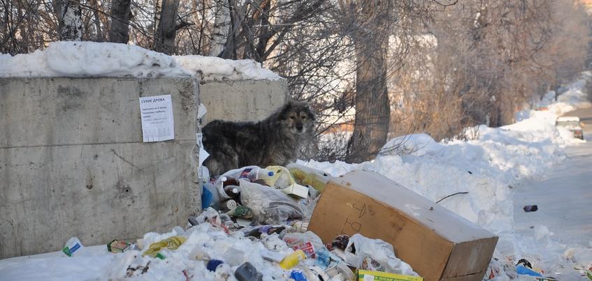 Бешеная собака покусала трех человек в деревне под Ижевском