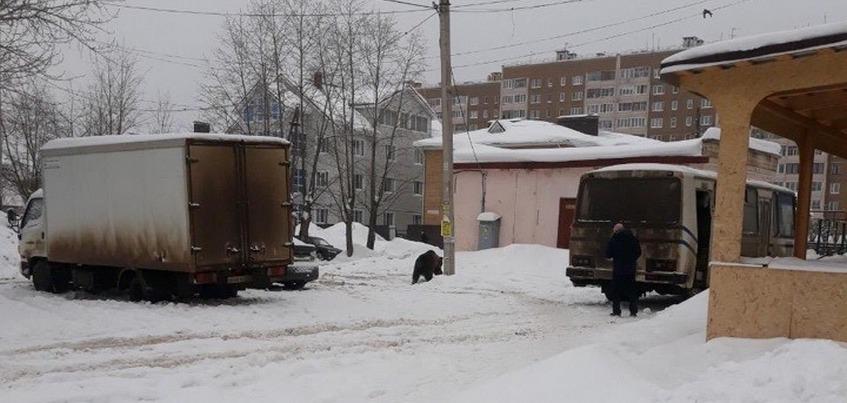 Медвежонка заметили в районе железнодорожного вокзала в Ижевске