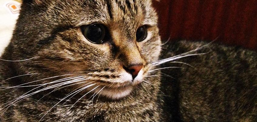 Конкурс «Покажи кота»: пришли фото любимца и выиграй 10 кг корма
