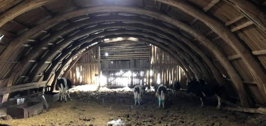 Глава Минсельхоза Удмуртии прокомментировала информацию о замерзающих коровах в Балезинском районе