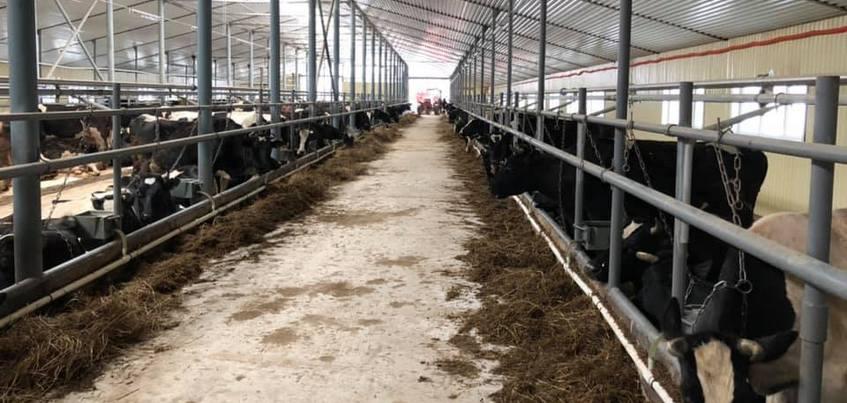 Замерзающих коров в Балезинском районе Удмуртии перевели в новое помещение