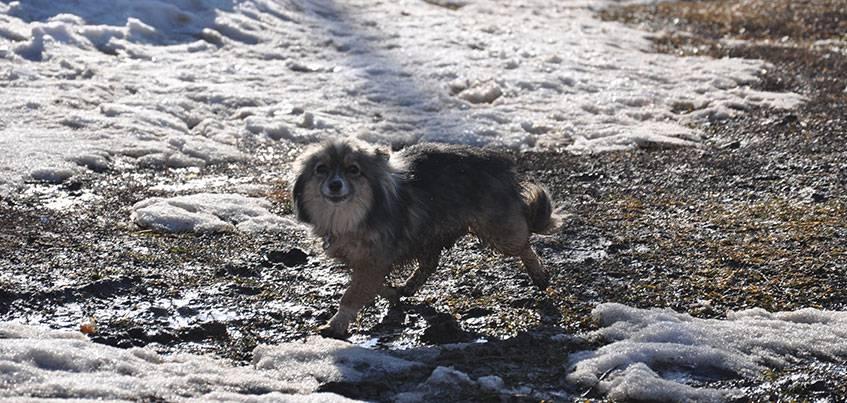 1,4 миллиона рублей на отлов и семь случаев бешенства: как в Ижевске решают проблему с бродячими собаками