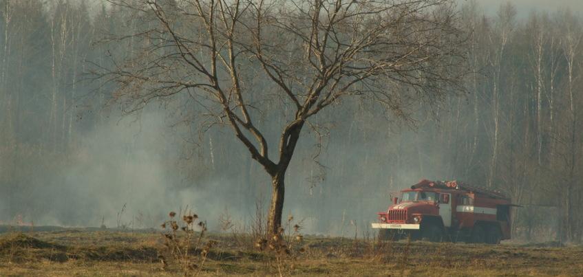 Костры запретили разводить в лесах Ижевска