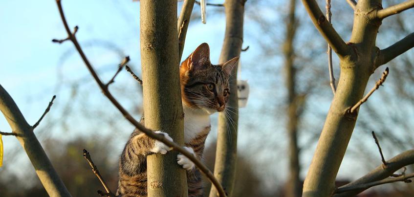 Как подготовить кошку к переезду на дачу?