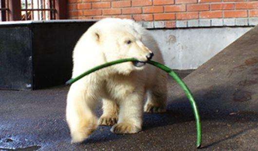 Зоопарк Ижевска «усыновил» потерянного медвежонка