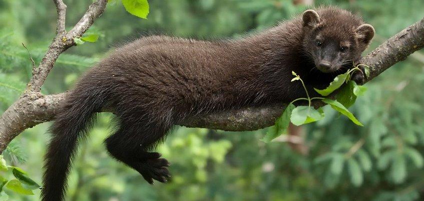 Новые хищники появятся в зоопарке Ижевска