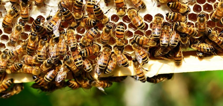 Есть вопрос: Правда ли, что в Удмуртии массово гибнут пчелы?