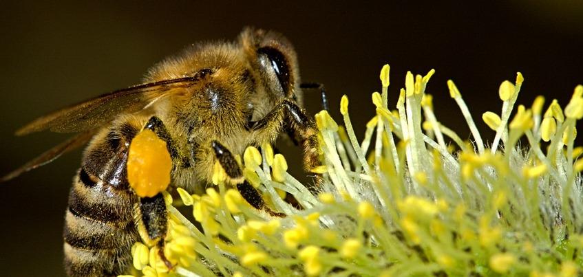Массовая гибель пчел произошла в Удмуртии