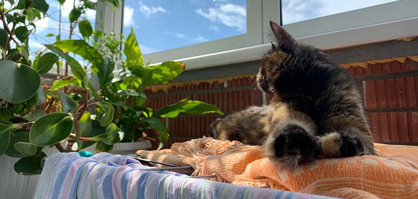 Как вернуть кошку или собаку с дачи без стресса?