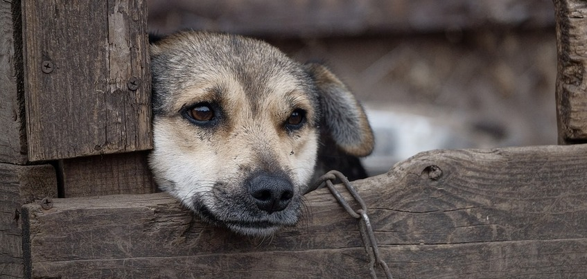 Убившего собаку на глазах детей мужчину осудили в Удмуртии