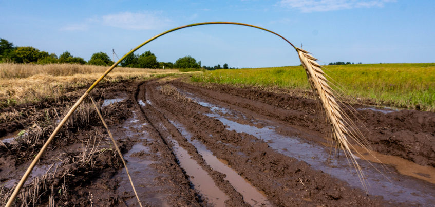 Не более 200 млн руб. возместят аграриям Удмуртии из-за гибели посевов