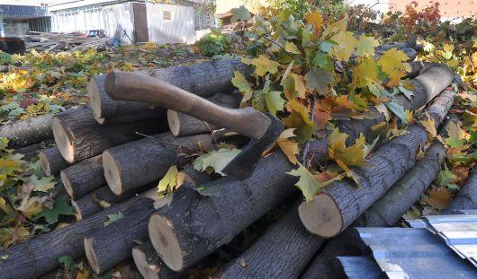 В Ижевске на бульваре Гоголя спилили деревья и начали стройку